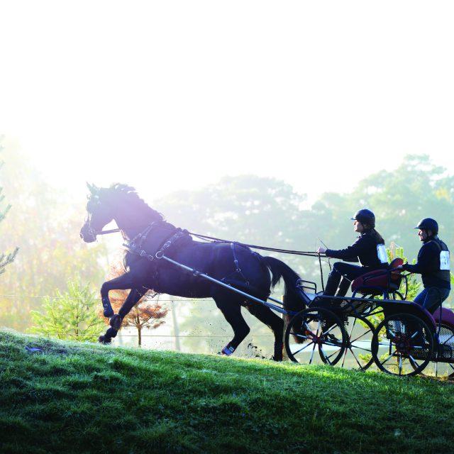 Fontainebleau au cheval